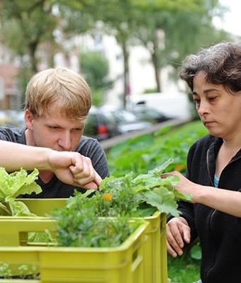 Eine Frau und ein Junge betrachten interessiert Salatpflanzen in einer Kiste.